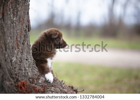 """Border Collie Puppy """"Knödel"""" looking into the distance. When we took this picture she was only 4 weeks old and just exploring the world around her."""