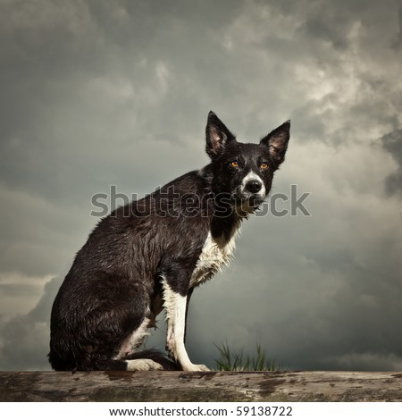Border Collie sitting on bench