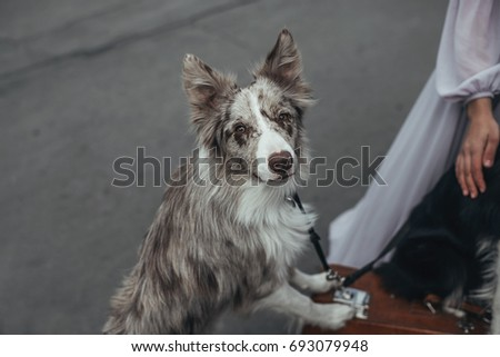 Border collie with suitcase waiting for train #693079948