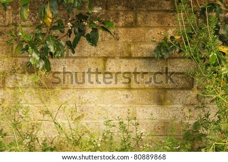 Border Formed by Vegetation on Old Country Wall