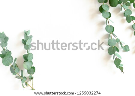 Border frame made of eucalyptus branches on a white background