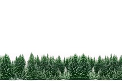 Border frame of green spruce pine trees forest covered by fresh snow during Winter Christmas time and New Year with large empty white blank space for text.