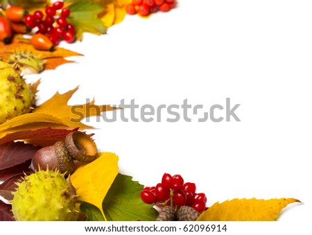 border from autumn elements isolated on white