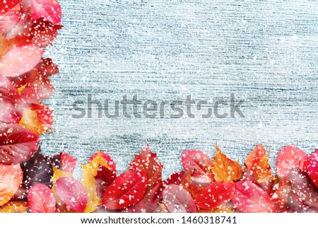 Border of autumn leaves on a white wooden background witn snow - a beautiful template for an autumn card or congratulations