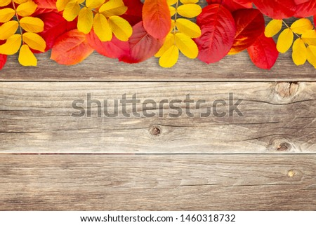 Border of autumn leaves on wooden background - a beautiful template for an autumn card or congratulations