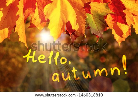 border of autumn maple leaves in the forest and the inscription Hello, autumn - a beautiful autumn greeting card