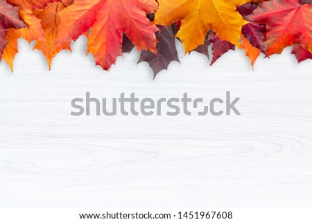 Border of autumn maple leaves on a white wooden background - a beautiful template for an autumn card or congratulations