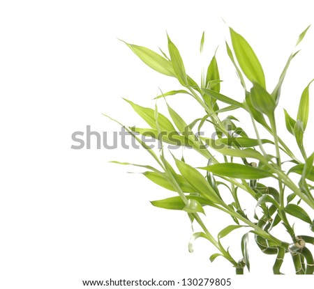 border of bamboo sprout on white background - stock photo