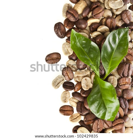 Border of coffee beans grains with leaves of coffee tree on white