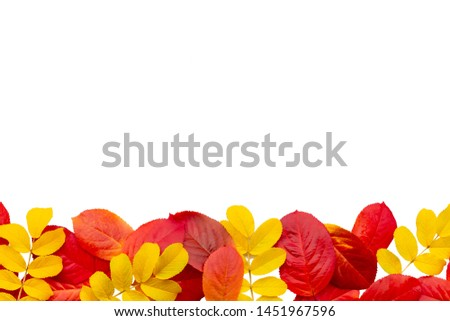 Border of colorful autumn maple leaves isolated on white background
