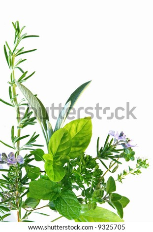 Border of fresh-picked herbs, including rosemary, mint, basil, oregano, thyme and parsley.