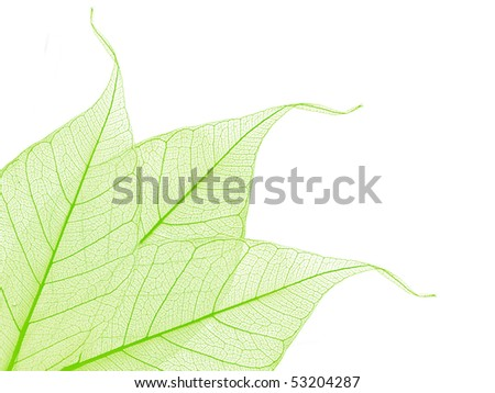 border of green decorative skeleton leaves, copyspace for your text