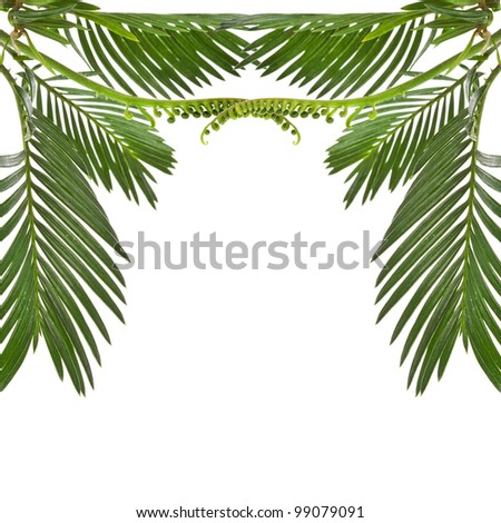 border of leaves palm tree on white background
