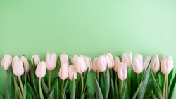 border of pink tulips on a green background