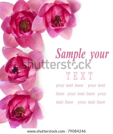 Border of pink water lilies over white background