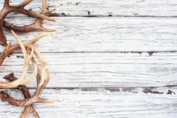 Border of real white tail deer antlers over a rustic wooden table. These are used by hunters when hunting to rattle in other large bucks. Free space for text. Top view.