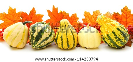 Border or edge of gourds and vibrant autumn leaves over white