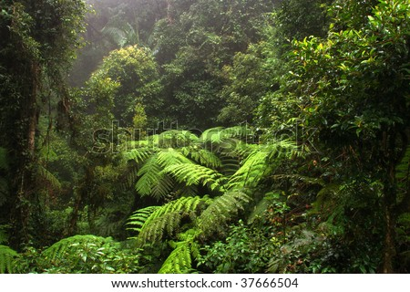Border Ranges National Park, New South Wales (Australia)