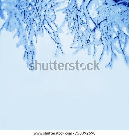 Border winter nature christmas background. View through the white frost pine branch. Happy new year frame card. Text space.  #758092690
