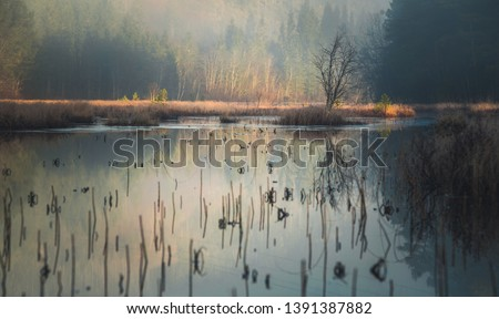 Boreal forest and swampy grounds near Jonsvatnet lake. Autumnal fog and low light. Norway.
