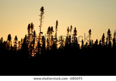 Boreal Forest Silhoette : Sunset in Northern Ontario