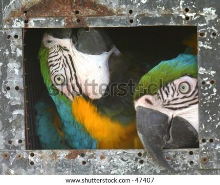 Bored Parrots