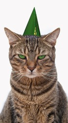Bored tabby cat with a party hat on his head sitting in front of a white background. Lets go party.Animals - pets do not tolerate exuberant merriment and celebration.