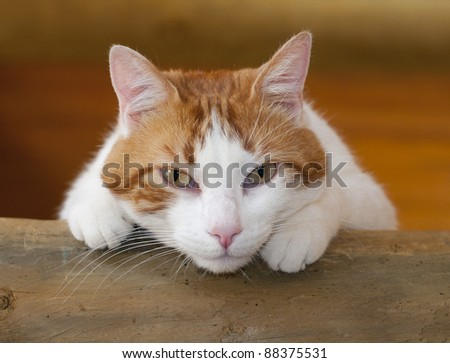 boring and quiet looking domestic cat