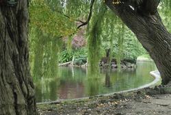 Boston Common park, Massachusetts