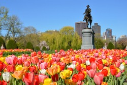 Boston Public Garden. George Washington Statue surrounded by tulips, tourists and beautiful spring colors.