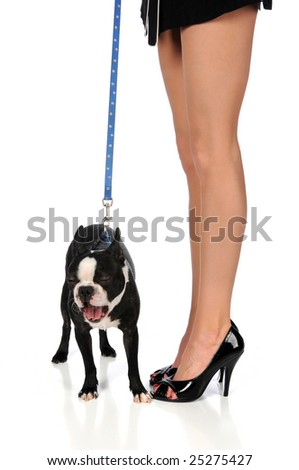 Boston terrier yawning next to woman's legs in high heels