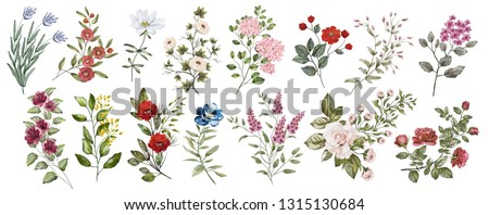 Botanical collection of flowering wild and garden plants. Set: leaves, many different flowers, rose branches, herbs and other natural elements.