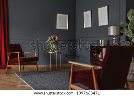 Botanical drawings on a dark gray wall in the corner of a luxurious living room interior with rich, red armchairs and curtain #1097663471
