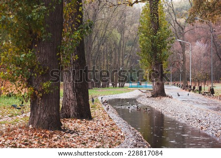 Botanical garden in rain. Autumn landscape. Ducks swim in pond. Rainy weather.