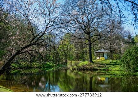 Botanical Garden. Japanese Garden in Moscow.Japanese cherry tree