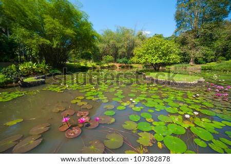 Botanical Garden landscape in Peradeniya, Kandy, Sri-Lanka