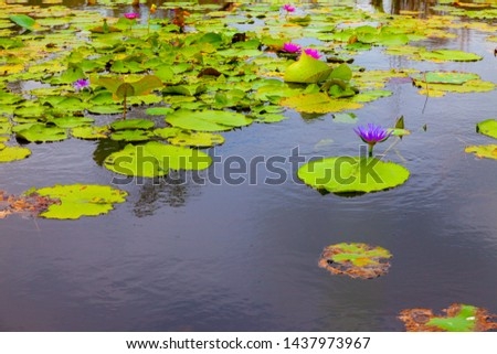 Botanical garden, landscape of botanical garden. Lotus leaf in the river.