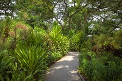 Botanical Gardens Walkway With Tropical Palms and Lush Shrubbery - Singapore