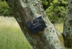 Botanical Identification Label for Carpinus turczaninowii (Korean Hornbeam Tree) in a Park in Rural Devon, England, UK