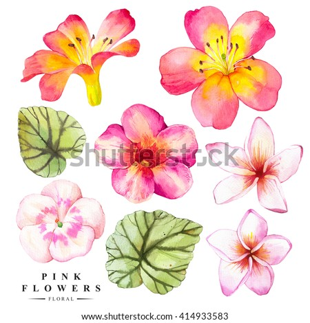 Botanical illustration with realistic tropical flowers and leaves. Watercolor collection of green begonia, plumeria, lily. Handmade painting on a white background.