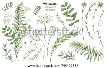 Botanical illustrations. Floral set. Watercolor bouquet.