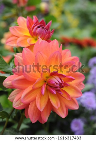 Botanical photo orange flower green background  botanic gardens