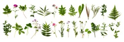 Botanical set. herbarium of various plants on a white background. Freshly cut plants.  Forest flowers, herbs, berries.