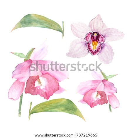 Botanical watercolor illustration sketch of cattleya flower and orchid on white background. Could be used as decoration for web design, cosmetics design, package, textile