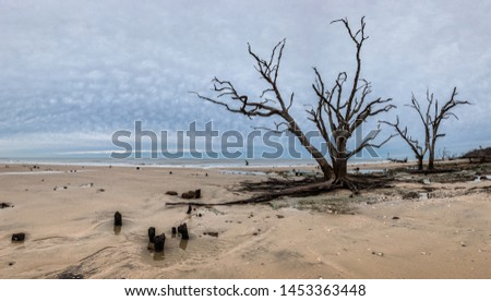 Botany Bay beach panorama at cloudy day, Edisto Island, South Carolina, USA #1453363448