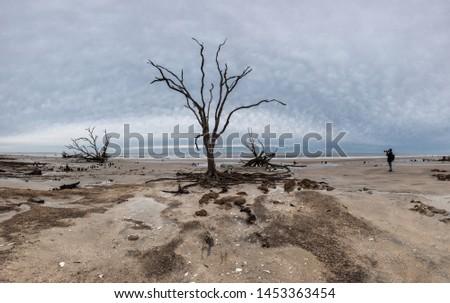 Botany Bay beach panorama at cloudy day, Edisto Island, South Carolina, USA #1453363454