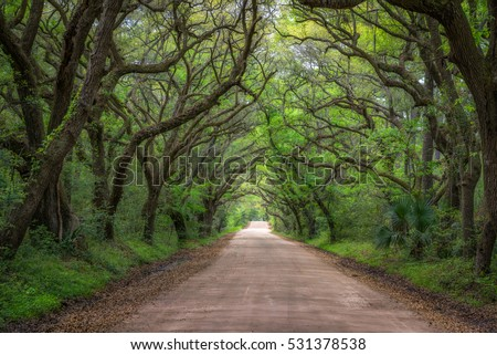 Botany Bay dirt road in South Carolina.  #531378538