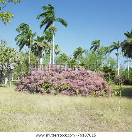 Botany garden jardin botanico de cienfuegos cuba stock for Jardin west palm