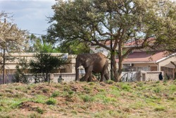 Botswana's Growing Elephant Population Creates Conflict with Humans, residents in the villages agree to lift the ban