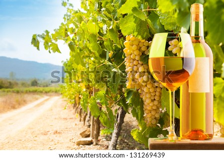 Bottle and glass of white wine on vineyard background